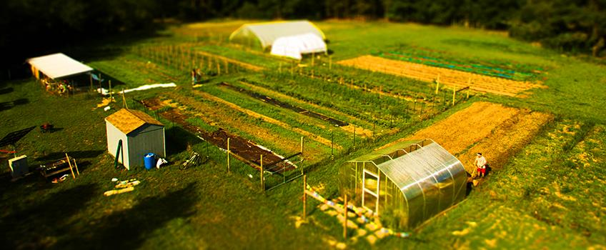 Stockton's Certified Naturally Grown Farm