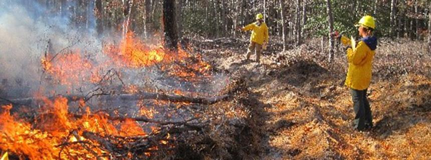 Forest Mgmt - Forest Fire Research