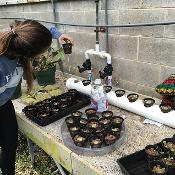 Sustainability student, Jacalyn, examines her hydroponics project for sustainable international development in Zimbabwe