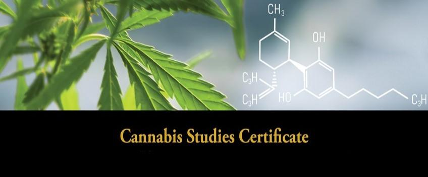 Cannabis Studies Certificate
