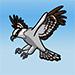 Osprey GIF