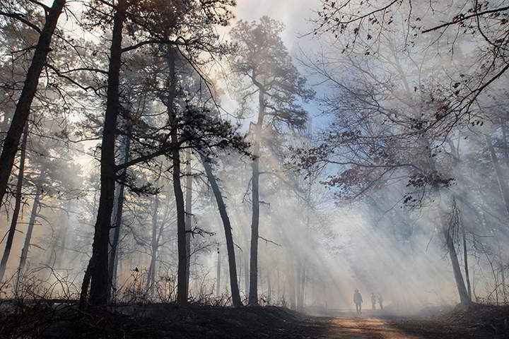 Sunlight pierces through smoke from a controlled burn. George Zimmerman's students joined the New Jersey Forest Service on the university's 10-year forest management plan