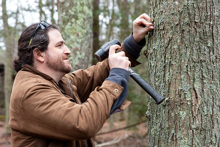 Aaron Stoler tapping a maple tree